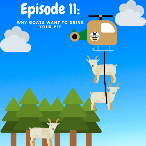 Image of a cartoon helicoptor dangling two goats, flying over evergreen trees and another goat